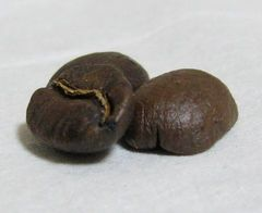 coffee-bean1.jpg